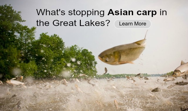 Asian CarpThreat to Great Lkes