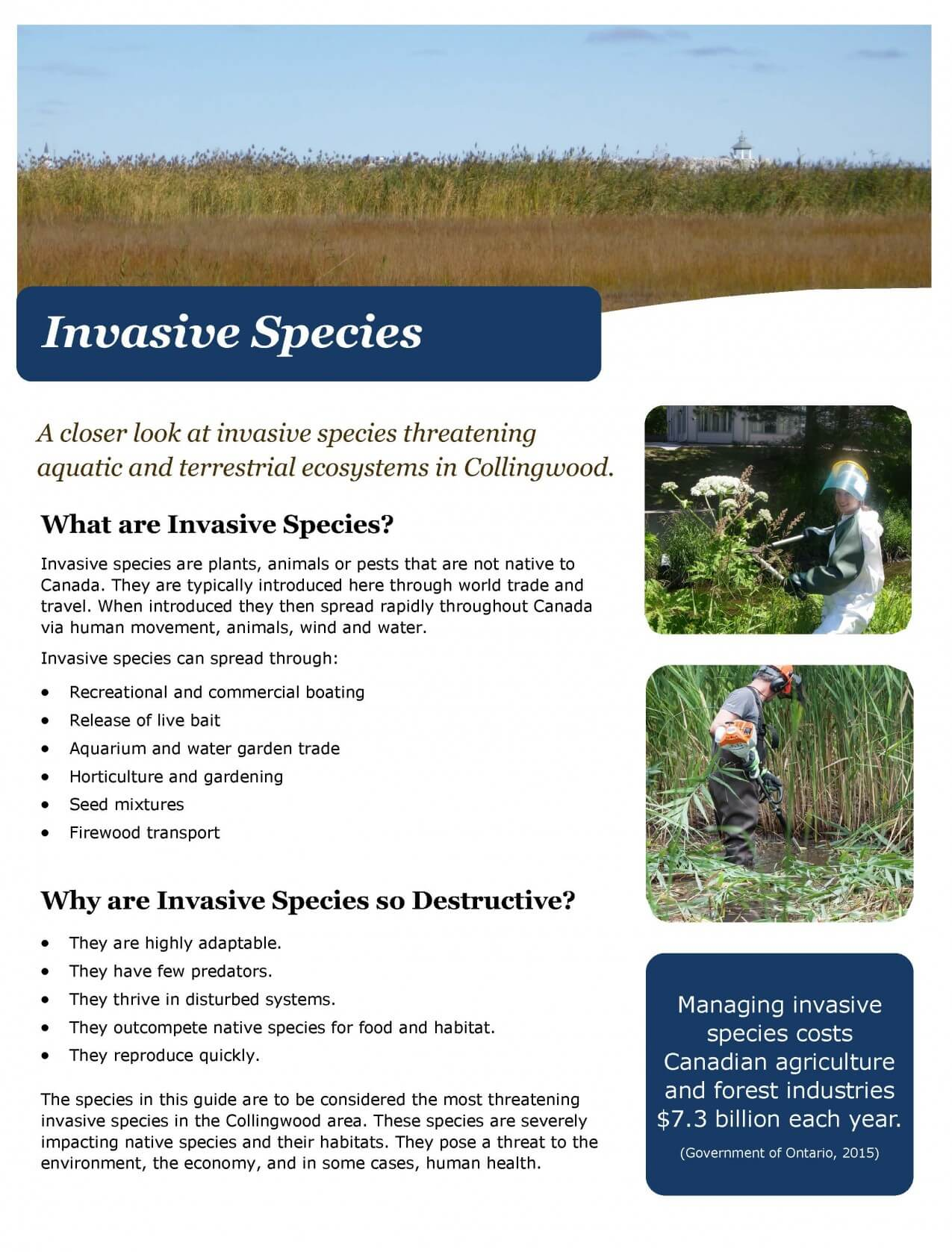 Invasive Species tool