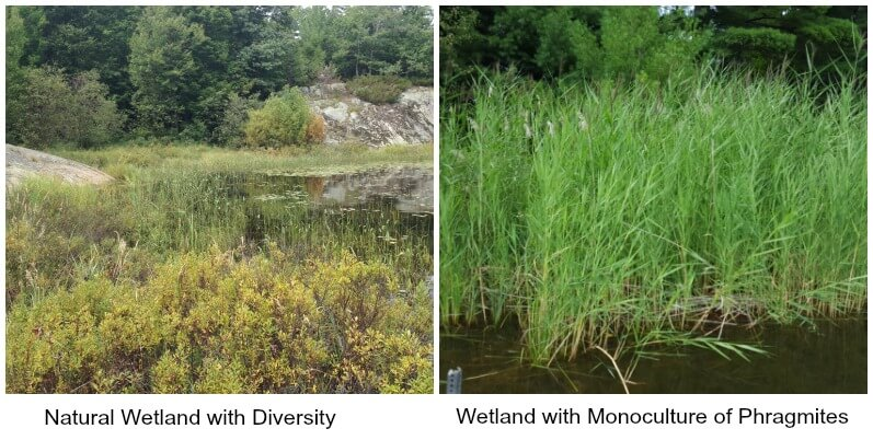 Wetland Comparisons Georgian Bay