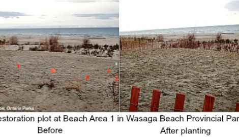 wasaga-beach-restoration-fb
