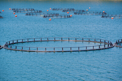 Net Pen Aquaculture