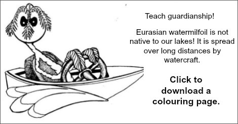 Colouring page link Eurasian milfoil
