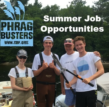 Phragbuster opportunties