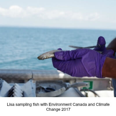 Sampling fish in the Great Lakes for Microplastics