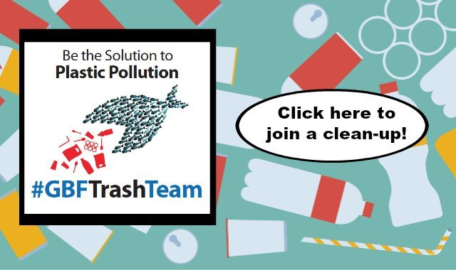 Home Page Image Shoreline clean-up