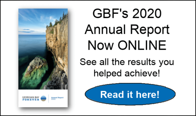 Front banner for Annual report 2020