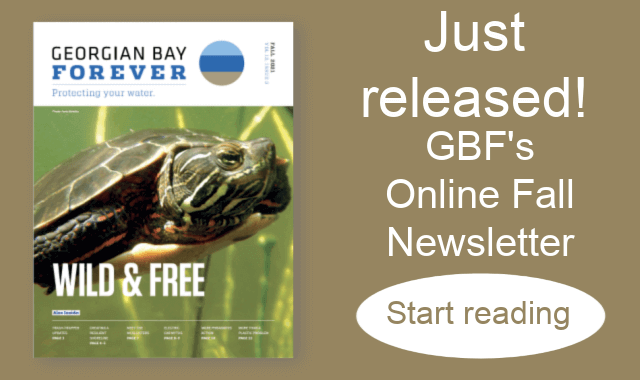 GBF Fall Newsletter Front page 640 x 380